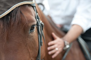 closeup of a horse head with detail on the eye and on rider hand